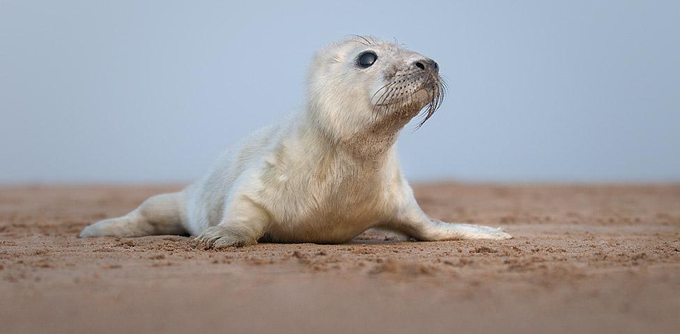 solomon the seal
